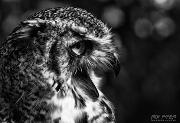 Eagle Owl: Monochrome Oil Paint Edit by nerdboy69