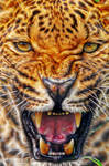 Angry Leopard: Fractalius G4 Re-Edit by nerdboy69