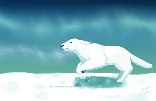 Polar Bear Dog