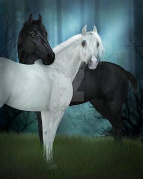 Fresian Arabian Pair