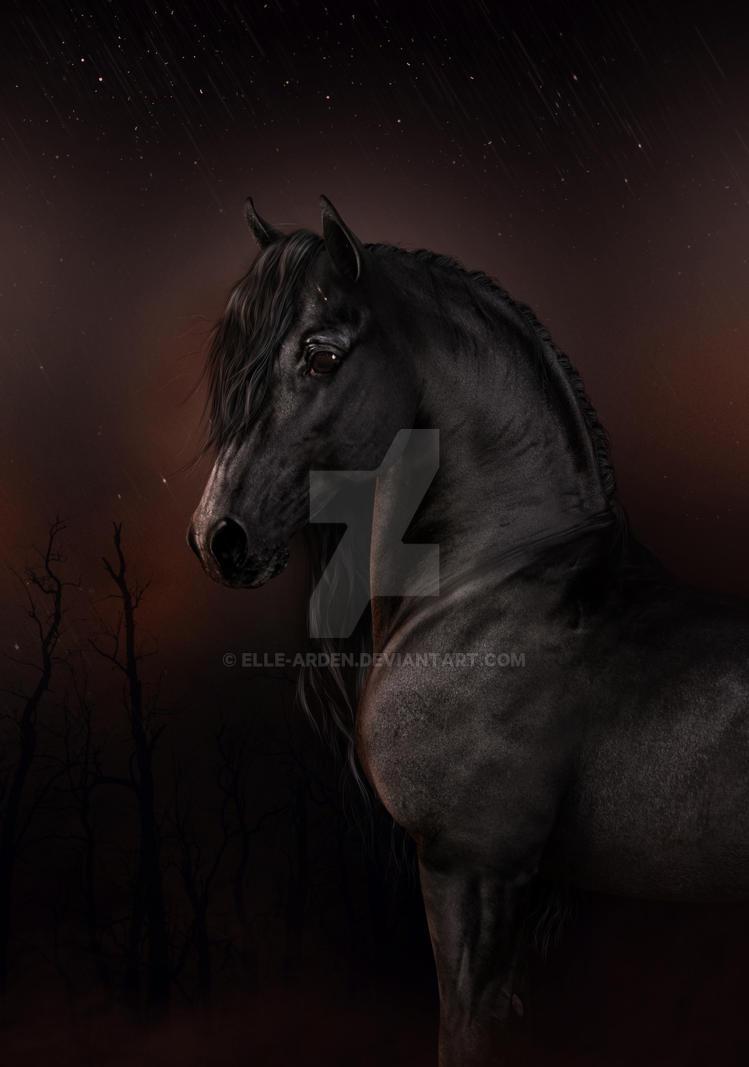Black Dawn by Elle-Arden