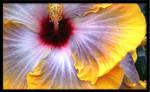 Hibiscus I by 321newbie123