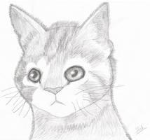 Cute Kitten by Lord-Hillsworth
