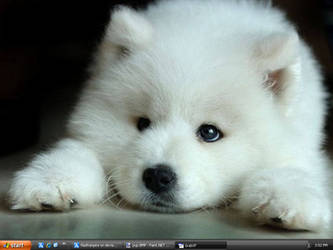my desk top wolf pup