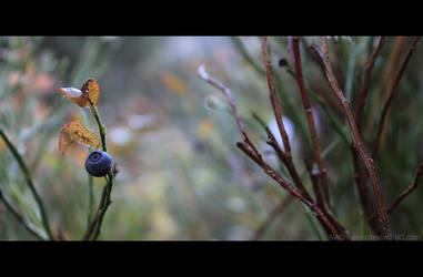 Dew by NADreamer