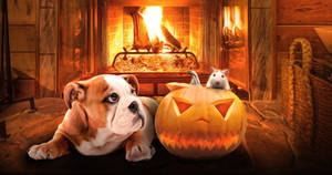 Fireside halloween with dog and mouse