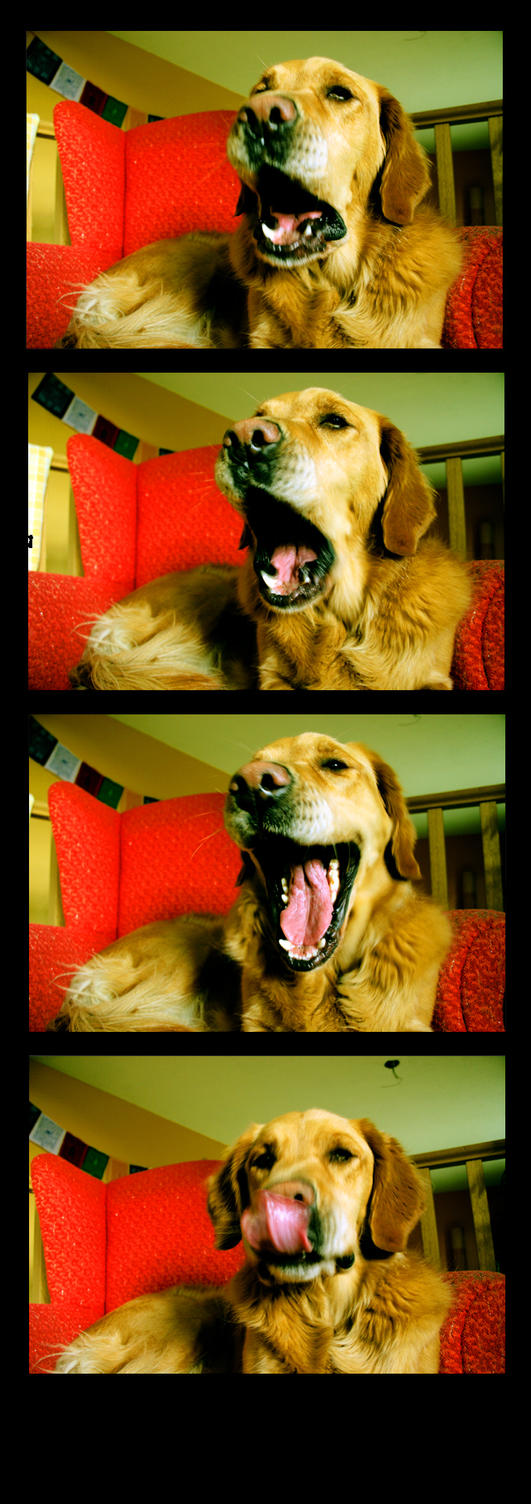 The Yawning Dog by glassonion14
