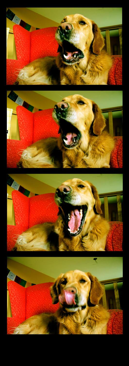 The Yawning Dog by glassonion14