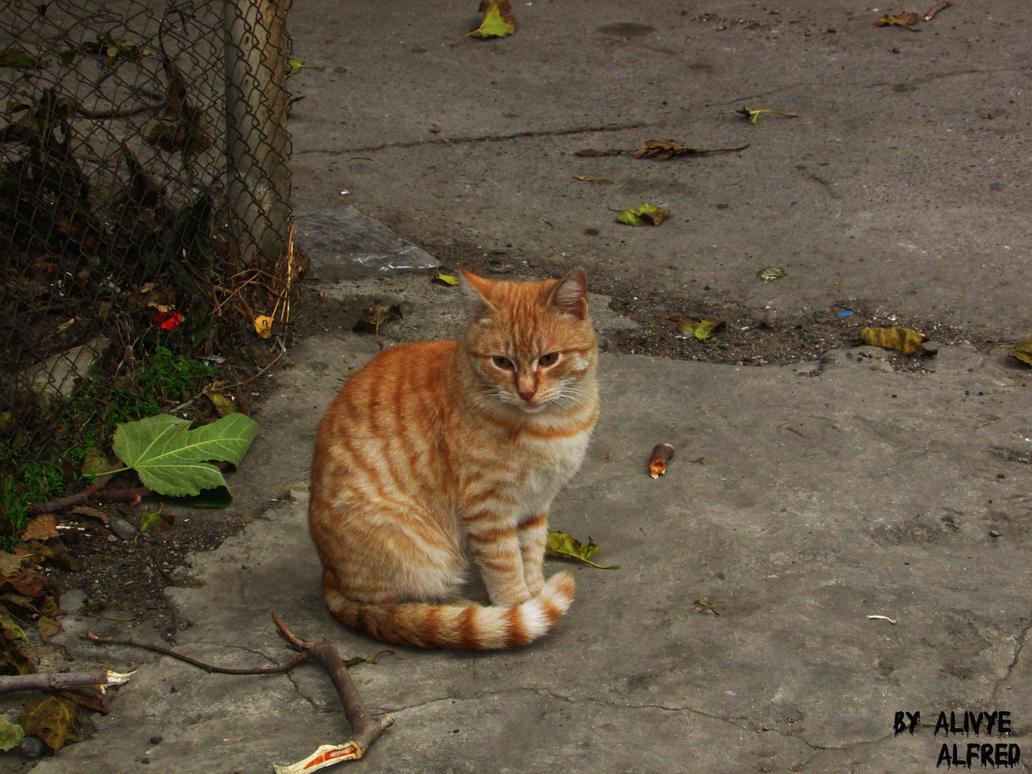 The street cat  Amazing looking By Alivye by Alivye