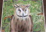 Striped Owl Pastel by HushHushKitten