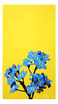 Flores Azules by leAlmighty