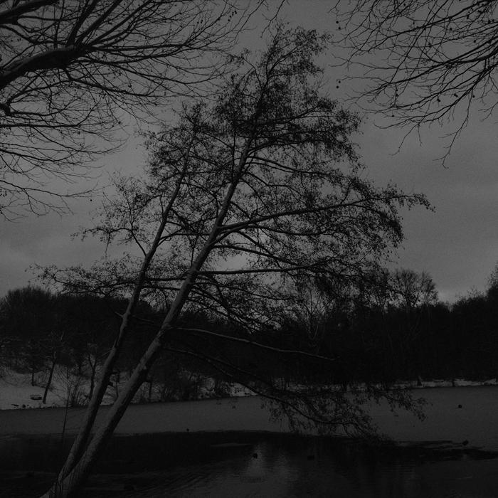 Arbre Enneige Ciel Obscure By Yuushi01 On Deviantart