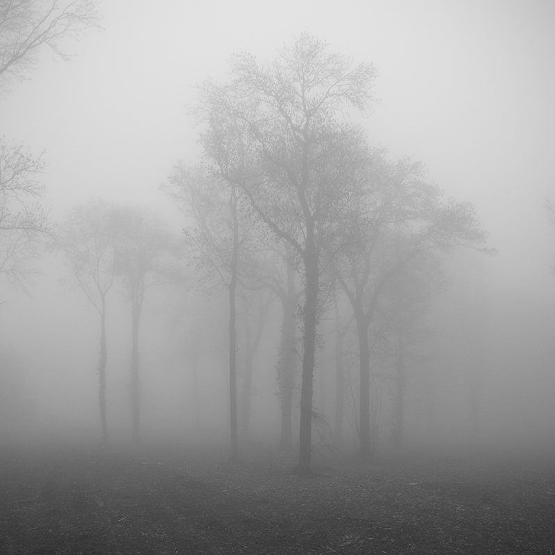 Clump of trees in the mist by yuushi01