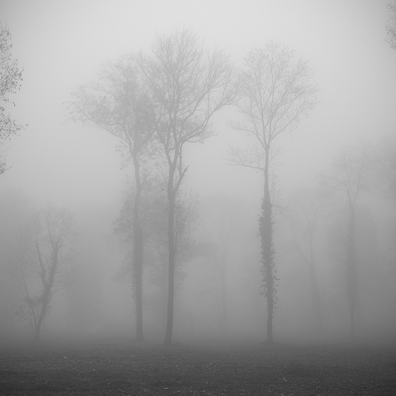 Clump of trees in the mist 2 by yuushi01