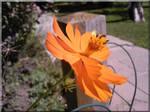 Lucky Orange Flower