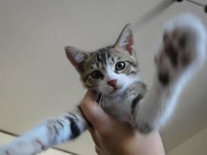 Put me down, human