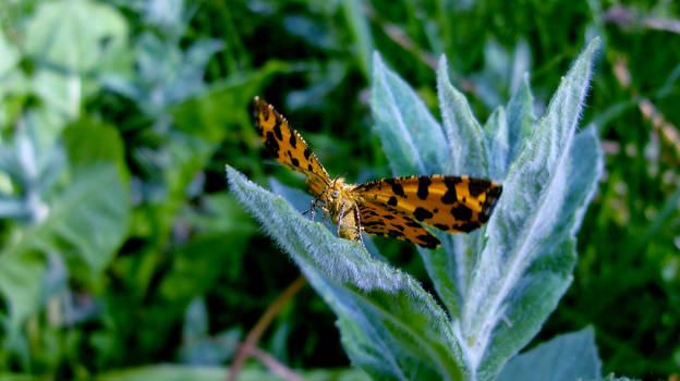 Butterfly In Love part II