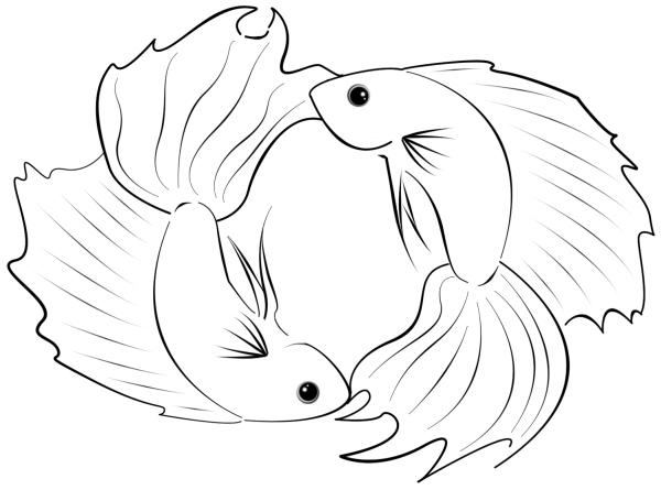 Flash betta pisces by dialicious on deviantart for Betta fish coloring pages