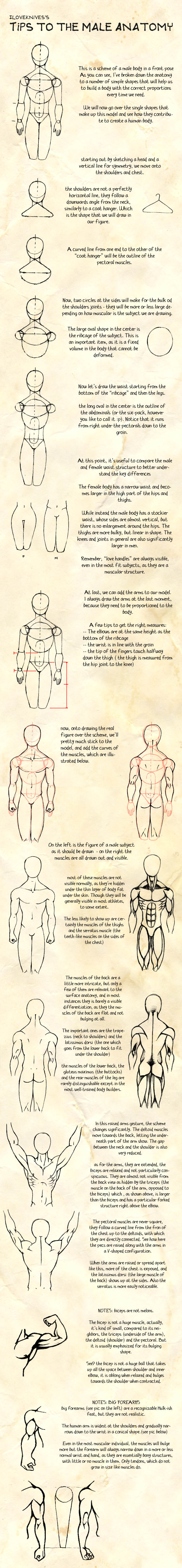 tips - male anatomy by ILoveKnives