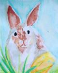 Traditional - Bunny