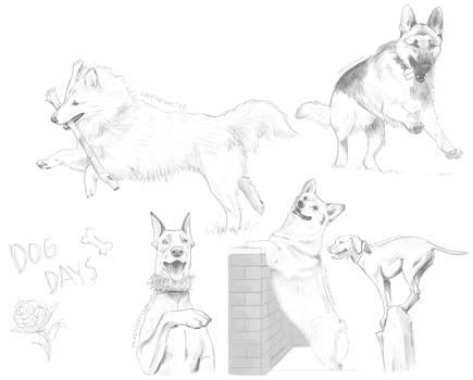 The Dog Days of Summer by Jindovi