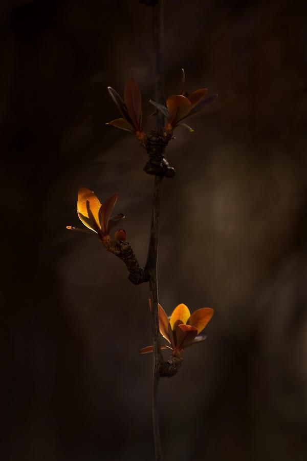 Lamps by padika11