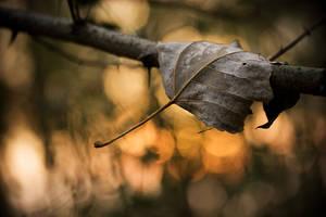 Late fall mood by padika11