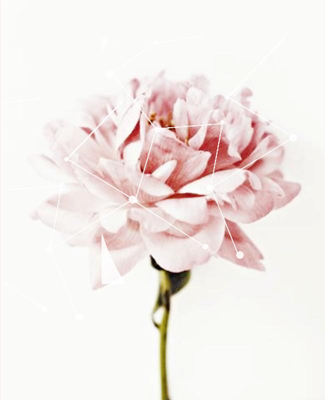 Flower Texture By Zerriesmiles On DeviantArt