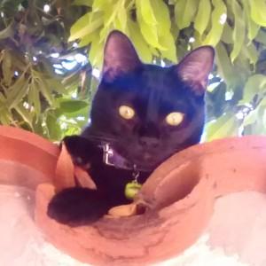 ViChiTa's Profile Picture