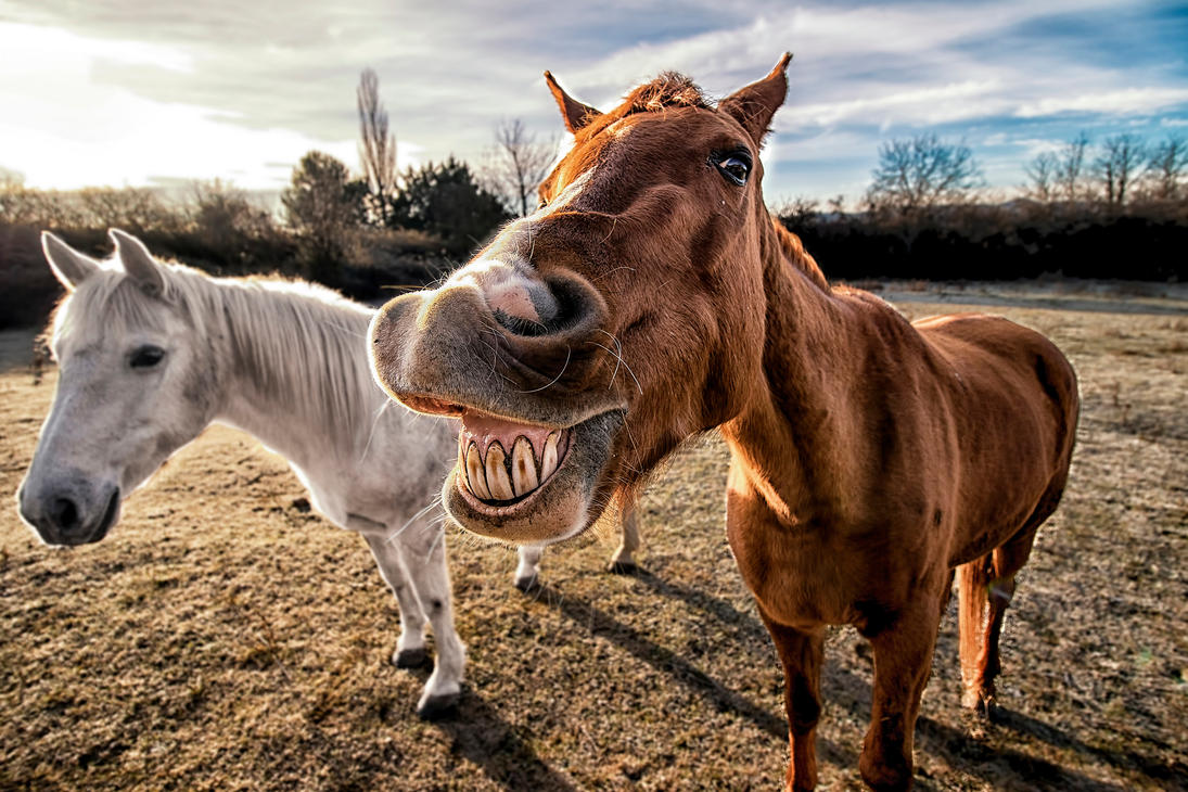 Smiling horse by etiark