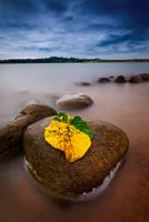 COLOR AND CONTRASTS by EdwinMartinez