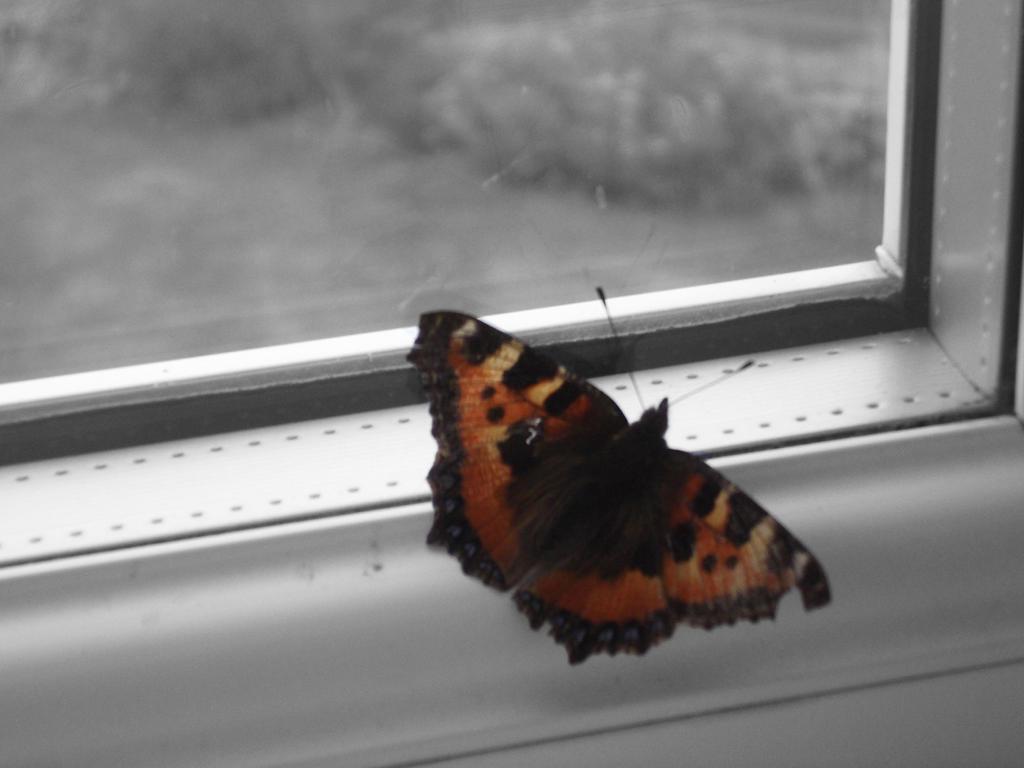butterfly by moonlightflower1