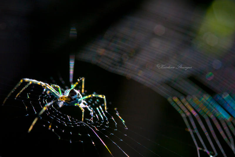 Rainbow Arachnid by KStranger