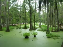 Swamp by choclatebrownie23
