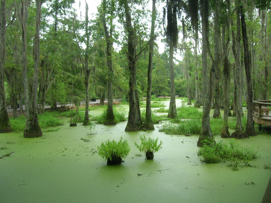 Swamp by choclatebrownie23