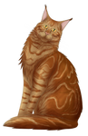 Fox the Maine Coon  by Suomen-Ukonilma