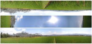 rice-field-landscapes