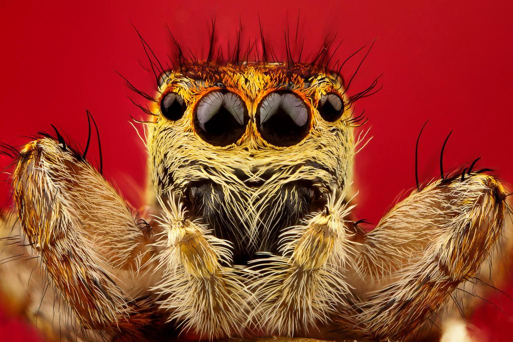 spider1 by evirgen2008