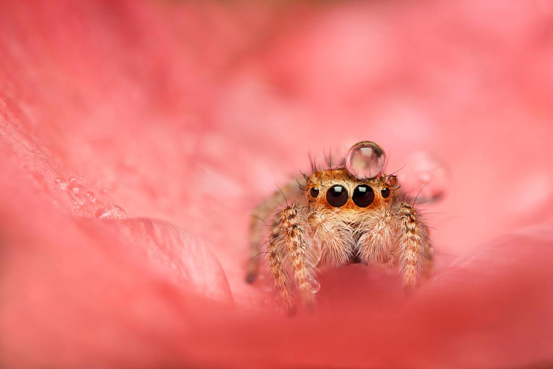 spider4 by evirgen2008