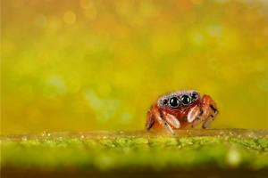 spider7 by evirgen2008