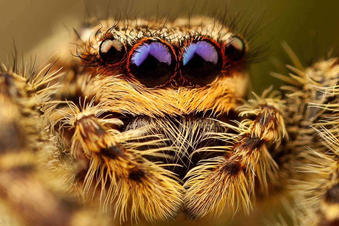 spider8 by evirgen2008