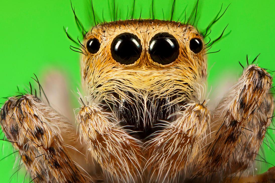 spider10 by evirgen2008