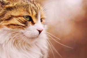 Cat III by evirgen2008