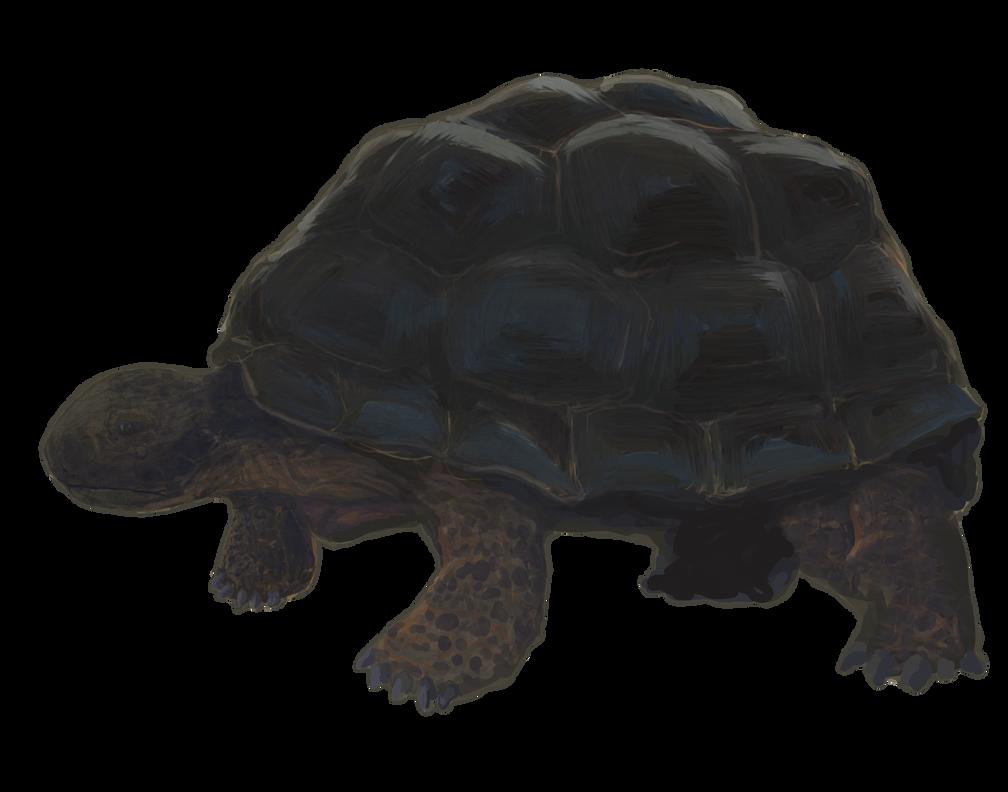 Tortoise Pic by AJsAlterEgo