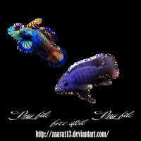 fish png by nasrzaara