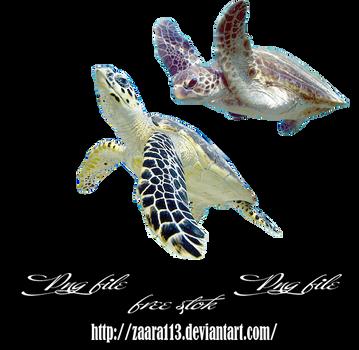 Turtle png by nasrzaara