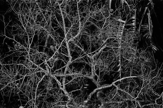 The skeletal tree