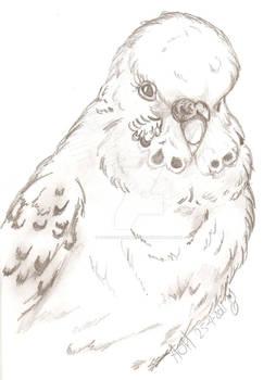 ..::Inas Bird Pjuske::..
