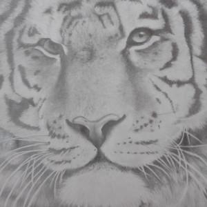 singletm32841's Profile Picture
