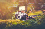 Danbo Takes up Photography